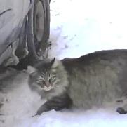la gatta Masha che salva il neonato