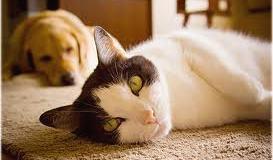 linfoma-intestinale-nel-gatto-e-nel-cane