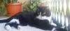 reti-per-gatti