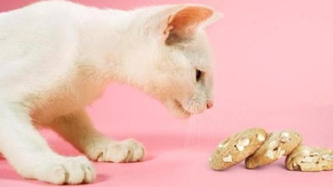 Ricette di Biscotti per Gatti da NON Fare Mai