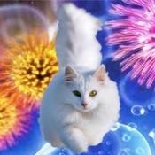 Sistema Immunitario nel Gatto
