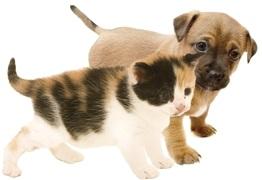 sterilizzare-cane-gatto