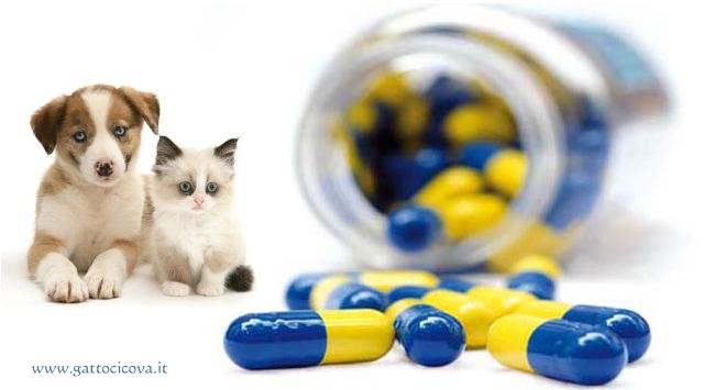 Antinfiammatori nel Cane e nel Gatto