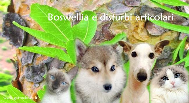 Boswellia nel Cane e nel Gatto