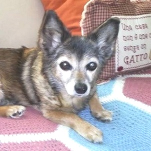 BPCO nel Cane: il caso di Stella