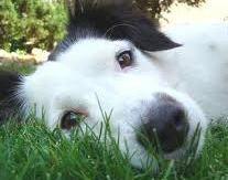 cure-naturali-insufficienza-mitralica-cane