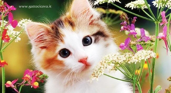 Piante tossiche per gatti for Piante velenose per i gatti
