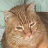 Tumore cutaneo nel gatto