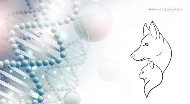 Omotossicologia nel Gatto nel Cane