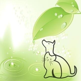 Organi Emuntori nel Cane e nel Gatto