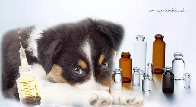 Trombocitopenia nel Cane e Vaccinazioni