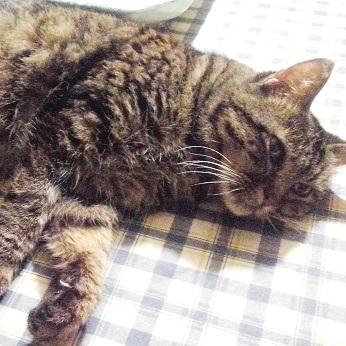 Enfisema Polmonare nel Gatto: PICCHIA