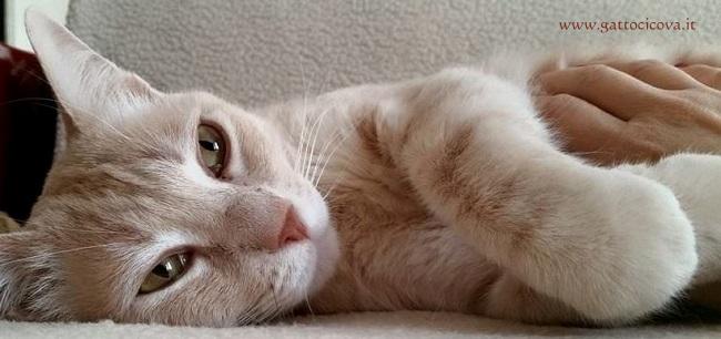Enterite Eosinofila nel Gatto