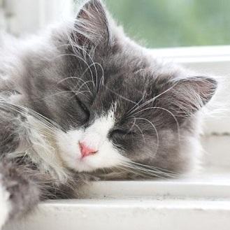Gatto che dorme tanto