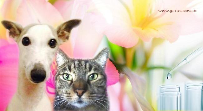 Emergency nel Gatto e Cane