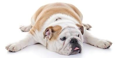 Cure Rimedi Naturali Obesità Cane