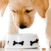 Alimentazione Casalinga nel Cane