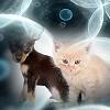 Radicali Liberi nel Gatto e nel Cane