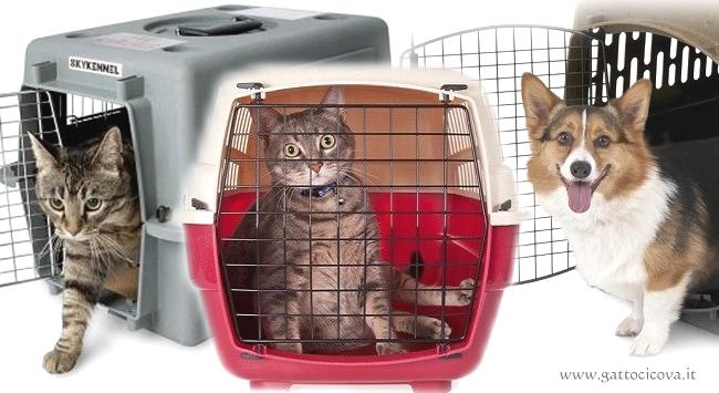 Evacuazione di Animali Domestici
