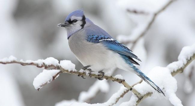 proteggere gli Uccelli dalla Neve