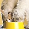 Diete Ipoallergeniche per Gatti e Cani