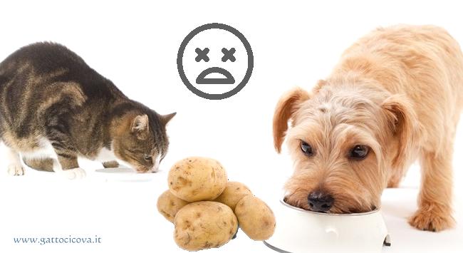 Patate nel Cane e Gatto