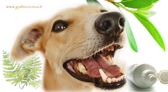 Pulire i Denti al Cane
