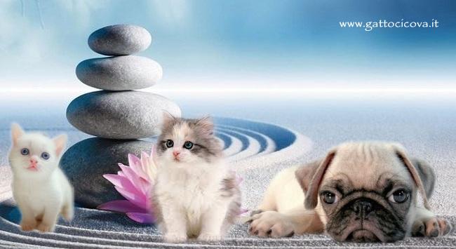 Salutogenesi nel Cane e Gatto