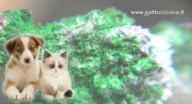 Kalium Sulfuricum