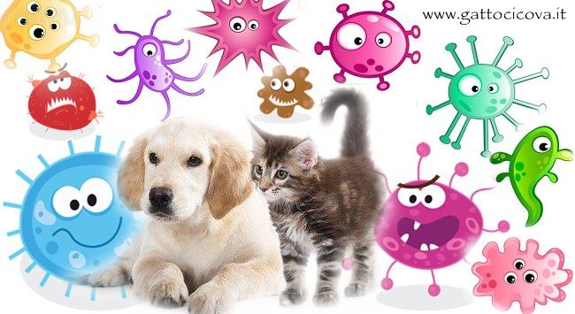 Batteri Intestinali nel Cane e Gatto