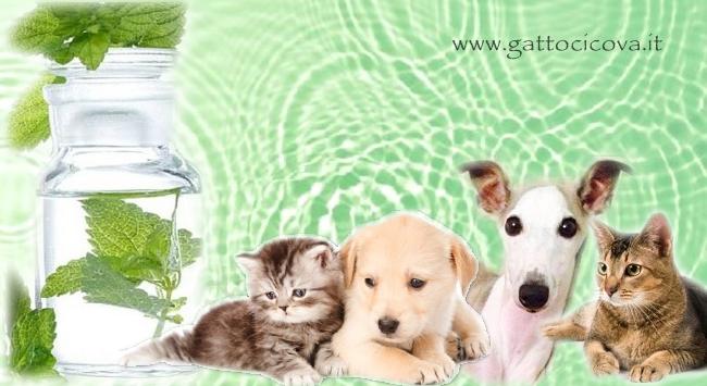 Disincrostare i Visceri di Cani e Gatti