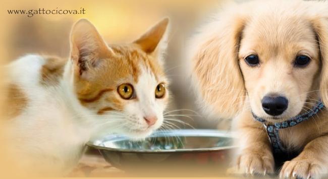 Industria del Pet Food