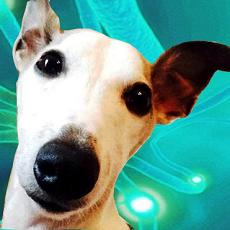 foto de Papilloma nel cane: lesioni benigne virali cure naturali