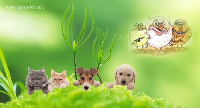 Cani e Gatti INTOSSICATI