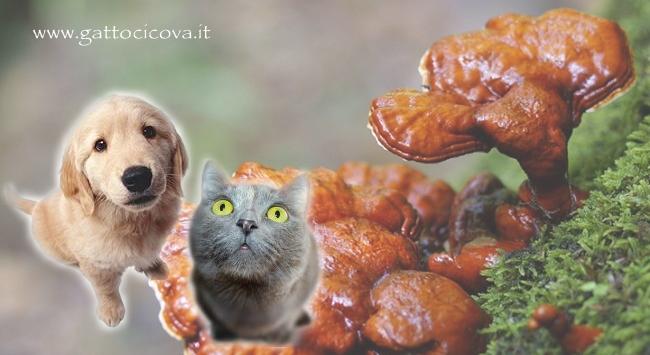 Reishi nel Gatto e Cane