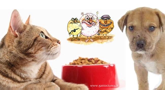 Micotossine nel Pet Food