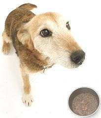 cane alimentazione naturale