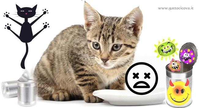 Dipendenza da Cibo Industriale nel Gatto