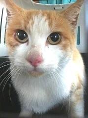 rimedi-cure-naturali-intolleranze-alimentari-nel-gatto