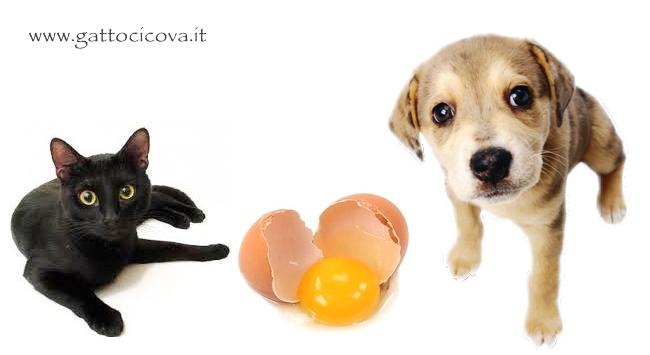 Uova nel Cane e Gatto