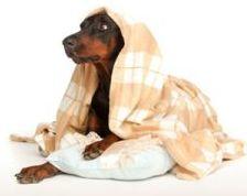 cure-naturali-raffreddore-cane