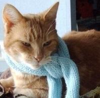 cure-naturali-tonsillite-gatto
