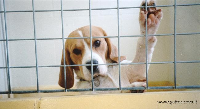 Aziende che TESTANO su Animali
