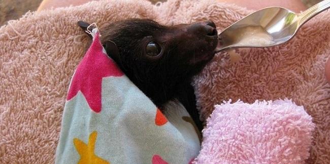 Soccorso Pipistrelli