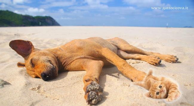 Cani e Gatti in Spiaggia