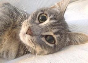 rimedi-cure-naturali-gatto-anziano