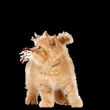 Svezzamento nel Gattino
