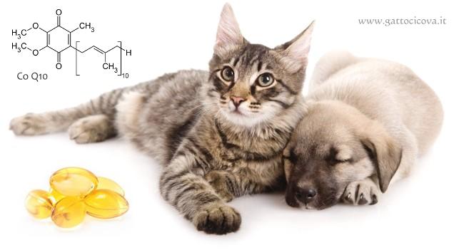 Malattie Cardiache nel Gatto e nel Cane