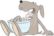 sostanze-tossiche-fegato-cane