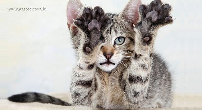Unghie dei Gatti